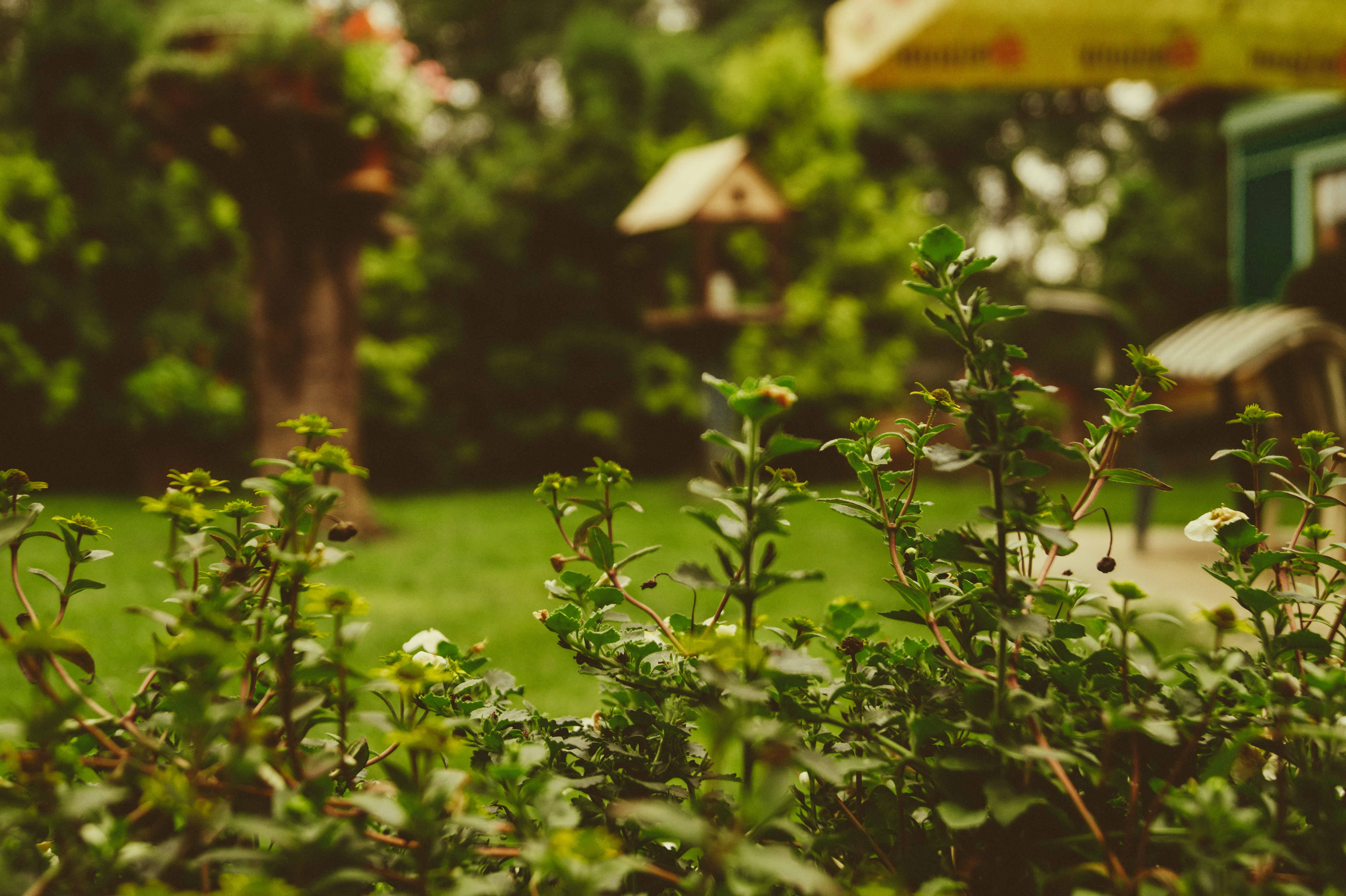 Buisson vert jardin